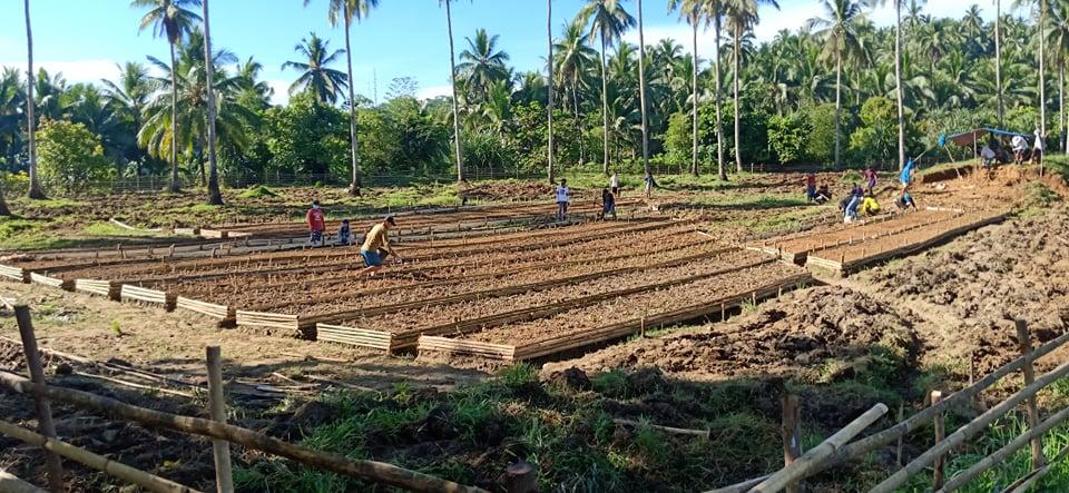 SMMCI creates a Communal Garden in San Pedro Sison in coordination with BLGU San Pedro